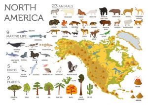 Fauna and flora of North America