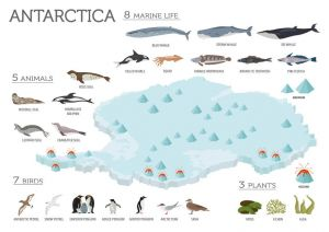 Fauna and Flora of Antarctica