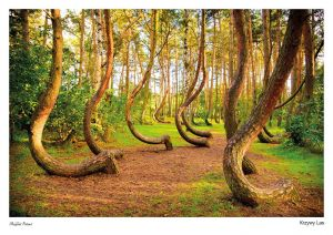 Magical Poland: Curved Forest