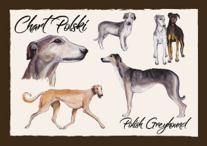 Polish Dog Breeds - Polish Greyhound