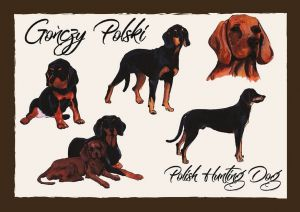 Polish Dog Breeds - Polish Hunting Dog