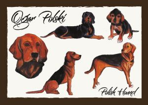 Polish Dog Breeds - Polish Hound