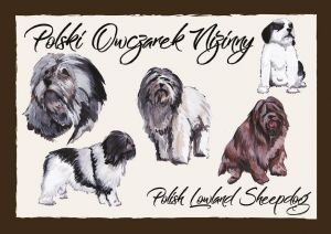 Polish Dog Breeds - Polish Lowland Sheepdog