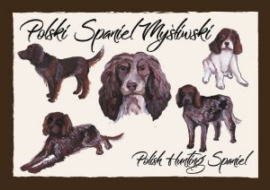 Polish Dog Breeds - Polish Hunting Spaniel