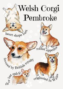 Dog breeds - Welsh Corgi Pembroke