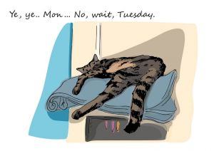 Everyday cat - Tuesday