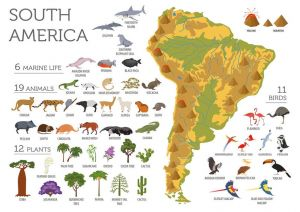 Fauna and flora of South America