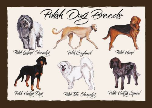Polish Dog Breeds
